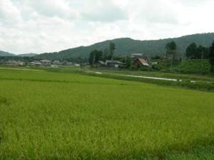 市島の田園風景