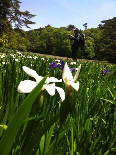 池に咲く花