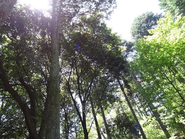 大木を囲んで