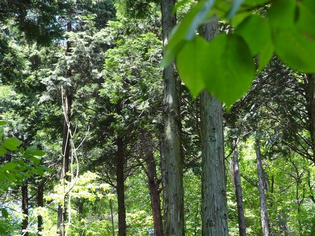 森林植物園の景色