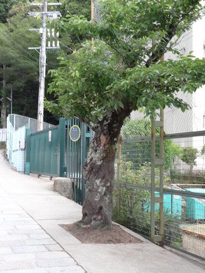 山田中学校裏門前の木